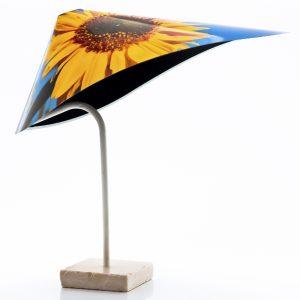 Sunflower-w-1